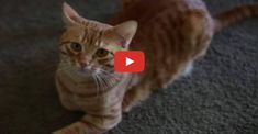 Click to see a lady get very vocal with her kitty!