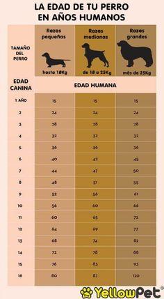 ¿Sabes la edad de tu perro en años humanos?