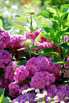 Mon Jardin Mes Merveilles: Vie du jardin - Eté