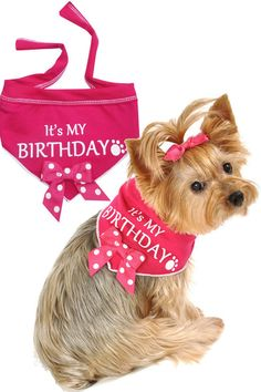 It's My Birthday - let's celebrate! You're dog will look adorable in the comfy, fun dog scarf on her special day! Machine wash; Made in the U.S.A.