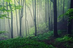 Living Forest Photograph by Evgeni Dinev - Living Forest Fine Art Prints and Posters for Sale