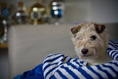 ashility by Walter Hupfer | Flickr - Fotosharing!