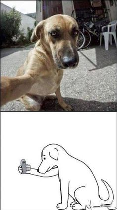 Doggie selfie For more fun visit: http://lolozaur.com
