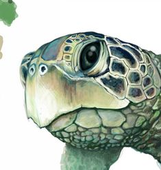 Marvelous Drawing Animals In The Zoo Ideas. Inconceivable Drawing Animals In The Zoo Ideas. Turtle Plush, Baby Sea Turtles, Turtle Painting, African Cichlids, Colorful Fish, Tropical Fish, Nautical Art, Sea Creatures, Art Techniques