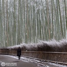 Exploration & Photo by @bennyrgautama Location / Sagano, Kyoto, Japan