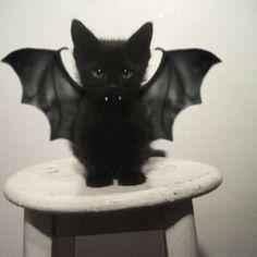 Batcat<3