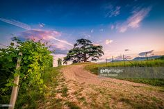 Langhe, Piedmont, Italy. | #stockphotos #gettyimages #print #travel