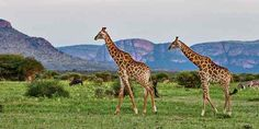 Marakele National Park – Travel Guide, Map & More! Weather And Climate, Large Animals, African Safari, Free Travel, Travel Guide, National Parks, Wildlife, Map, Travel Guide Books