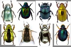 Image result for scarab beetle concept art