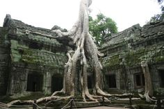 Root of the problemSiem Reap, Cambodia