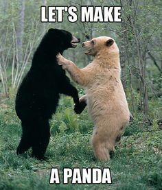 How Pandas are made...