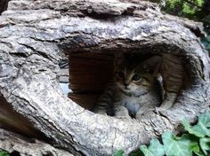 Kitten hiding in a log.