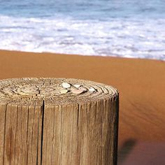 sunshine  Dreaming of sunshine and the beach on this miserable Monday . . #fmsphotoaday #sunshine #beach #torquay #bellsbeach #Monday by kat_menheere http://ift.tt/1KnoFsa