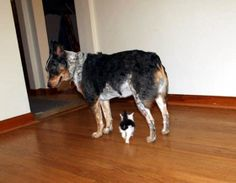 kitten adopted by dogs