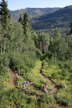 Mountain biking trails and beautiful views at Solitude Mountain Resort.