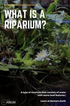 Riparium is a type of vivarium that mimics riverbanks and shores Aquaponics System, Hydroponics, Water Plants, Water Garden, Terrarium Plants, Moss Terrarium, Water Terrarium, Terrarium Ideas, Succulent Planters