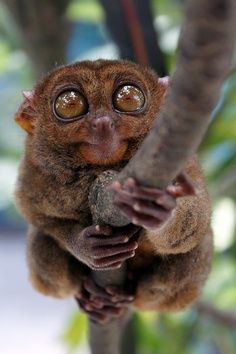 I don't know what animal this is but it's kind of cute.