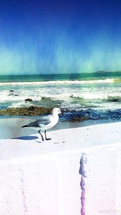 SEAGULL IN LANGEBAAN The Republic, South Africa, Safari, Wildlife, Bird, Beach, Painting, Animals, Animales