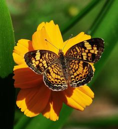 Colors Coordinated Butterfly & Flower