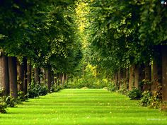 Top quality Landscape Pictures & Wallpapers, gathered by our Team just for your Background for Free. Landscape Pictures, Nature Pictures, Landscape Wallpapers, High Definition, Free Video Background, Images Google, Picture Search, Image Search, Green Trees