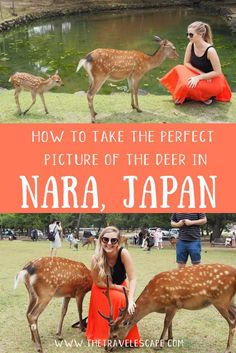 An hour from Kyoto and Osaka, Nara is the perfect day trip. Here's your guide to planning your trip, how to get to Nara and the top things to do in Nara. At the heart of the former capital of Japan, you'll find hundreds of freely sacred roaming deer. Nagasaki, Hiroshima, Japan Travel Agency, Japan Travel Guide, Asia Travel, Nara, Sapporo, Yokohama, Kyoto