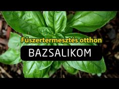 Herbs, Youtube, Plants, Herb, Plant, Youtubers, Youtube Movies, Planets, Medicinal Plants