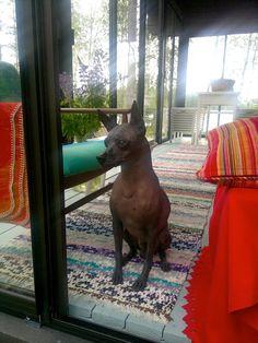 Olen kolmekymppinen äiti ja vaimo,  joka yrittää tasapainoilla työn ja perheen välissä. Arjen keskellä olen yhtä aikaa haaveilija ja realisti. Pidän kaikesta tyttömäisestä, mustavalkoisesta, raidallisesta ja kauniista. Nautin, jos minun ei tarvitse tehdä itse voileipääni. Pergola, 1990, Animals, Outdoors, Outdoor, Animaux, Animal, Animales, Outdoor Rooms