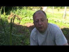 Cuidados del bancal de cebollas (tuhuertofacil.es)