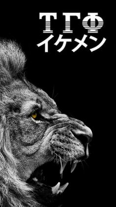 Ha Wallpaper, Black Wallpaper, Iphone Wallpaper, Tau Gamma, Dream Catcher Tattoo, Lion Logo, Lion Art, Asdf, Juventus Logo