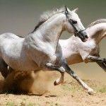 Yarış Atlarındaki İbret