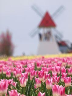 Springtime in Netherlands