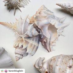 386 отметок «Нравится», 11 комментариев — Anna Aleshina (@anna_bentele) в Instagram: «Нарисовать цветок или вот такие потрясающие ракушки??? А соты с пчёлами??? Карен потрясающий…»