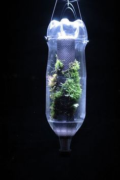Micro Vivarium - It was made of a 2 liter PET bottle and and a Hygrolon stick. Creative Terrarium Containers, http://hative.com/creative-terrarium-containers/,