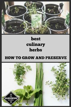Learn the best culinary herbs to grow in your herb garden. Follow these herb preservation tips to cook with herbs after the harvest. #herbsgardening