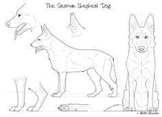 The German Shepherd Dog by *Maranez on deviantART