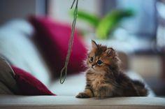 cutiest kitten in the world!!!
