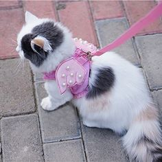 Ruris Cat Kitty Puppy Dog Walking Vest Harness Matching Lead Leash Angel Wings Costume With Lace Artificial Pearl Design Large Pink ** You can find out more details at the link of the image.Note:It is affiliate link to Amazon. #photooftheday