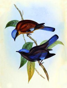 AVES DE ASIA John Gould vol. 2 colección javier magdaleno