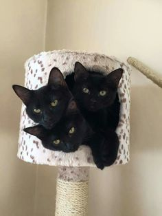 Via kattenmutsen, black cats roosting? XD
