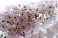 Blushing Blossoms by Kimber Leigh on 500px