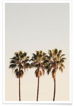 3 Palms als Premium Poster von Catherine McDonald | JUNIQE