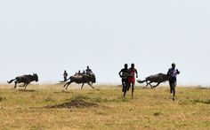 Athletes run during the Masai Mara Marathon in Masai Mara Game Reserve, Kenya, which was the 7th Masai Mara Marathon which is an event for public welfare aiming to promote environment protection and local education.