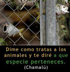 Dime como tratas a los animales...