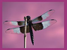 Fly Away 8x10 Photograph by CarissaLynn on Etsy, $20.00