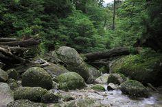 Reuters: Cum protejează România ultimele păduri virgine din Europa
