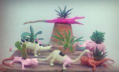 Fauna pinchuda y suculenta! #cactus #cactusysuculentas #cactuslover #cacti #cactilover #cactilove #suculentas #succulents #succulove #market #malasaña #dosdemayo #madrid