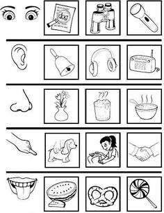 5 Senses Activities, Senses Preschool, Preschool Learning Activities, Kids Learning, Science Worksheets, Kindergarten Worksheets, Five Senses Worksheet, Early Childhood Education, Kids Education