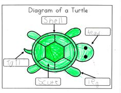 Mrs. Ricca's Kindergarten: Nonfiction Writing {Turtles}