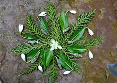 mano kellner, nature mandala Paganism, Witchcraft, Nature, Plants, Mandalas, Black And White Pictures, Calendar, Monochrome, Naturaleza