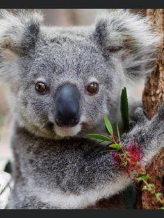 Animals Beautiful, Cute Animals, Koala Bears, Fish, Friends, Model, Pictures, Babies, Woman